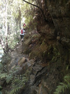 A beautiful section of trail under a rocky overhang, covered with moss