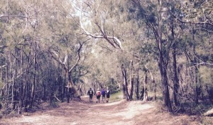 Casuarina Forest