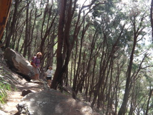 Casurauna forest