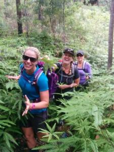 Lush hiking